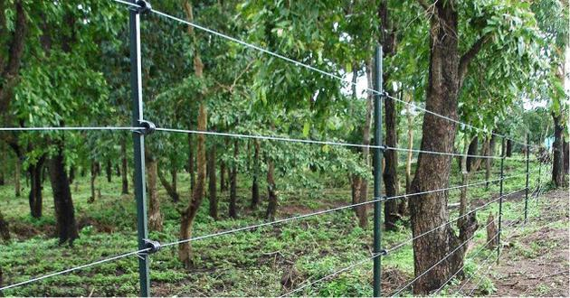 Solar Powered Electric Fencing 4